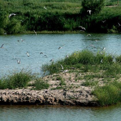 灞渭桥车游湿地景区[图]